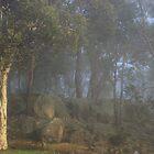 Boddington fog in colour by Gary Wooldridge