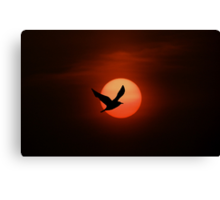 Bird and sun silhouette Canvas Print