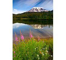Fireweed Reflections Photographic Print