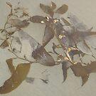 Floating seaweed by Dianne Rini