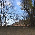 Chateau de Carcassonne entre les arbres by Dianne Rini