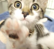 Crazy kitten wants YOU!  by Linda Matlow
