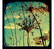 Head in the Clouds - TTV Photographic Print