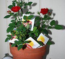 ornamental tea roses by Lenny La Rue, IPA