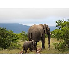 Elephant & Calf in South Africa Photographic Print