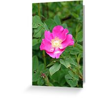 """A Wild Pink Rose"" Greeting Card"