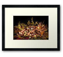 Autumnal still life composition Framed Print