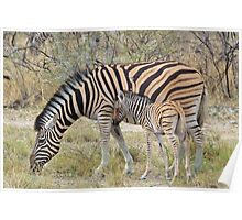 Zebra - African Wildlife - Paired up for Life Poster