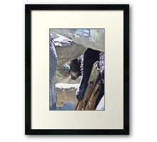 Bored Black Bear Framed Print