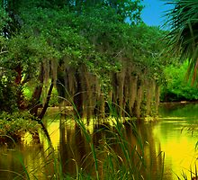 Golden Lagoon by Wanda Raines