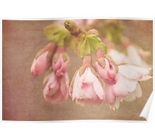 Spring Time - Pink Blossom Textured Poster