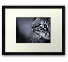 Portrait of cat in black and white Framed Print