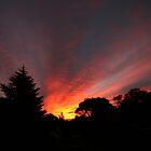 Fire in the Sky by Kim Roper