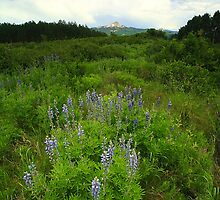 Lone Cone and Lupines by ThomasRBiggs