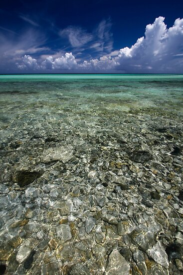 Coral Sea by geoff curtis