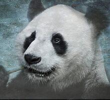 Munching Panda - Textured by SusieBImages