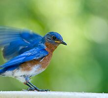 Salutations from Mr. Bluebird by Bonnie T.  Barry