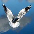Angel gull... by Mary Trebilco