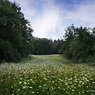 Field of Wild Flowers  by Antanas