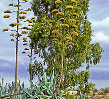 American Aloe / Century Plant Flowers by Squealia