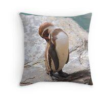 Penguin Preening ....... Throw Pillow