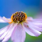 Bug on a Flower by DavidBerry