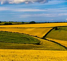 Fields Of Gold by David J Knight