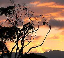 Firecracker Sky by CherilynJoy