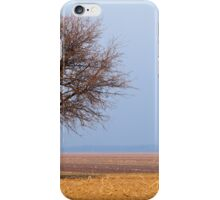 Single tree in plow land iPhone Case/Skin