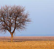 Single tree in plow land by naturalis