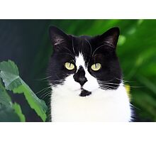 Black and white cat looking at camera Photographic Print