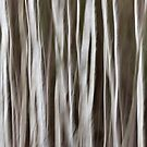 Birch by David Librach - DL Photography -