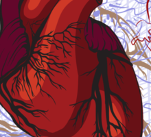 drawing of the heart, anatomical Sticker