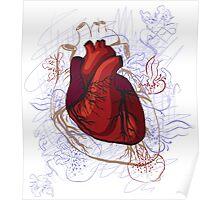 drawing of the heart, anatomical Poster