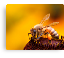 More Honey For Your Pollen Canvas Print