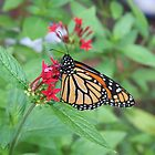 butterflies and flowers by Lori Walton