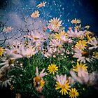Daisy Frenzy by purelydecorative