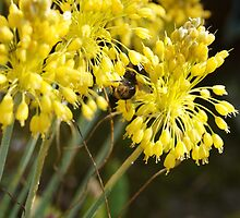 Yellow Flowers and Bee by vawart