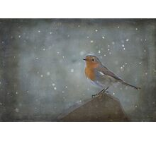 Mr Robins Snowstorm - Textured Photographic Print