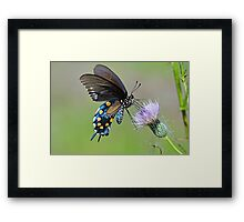 Butterfly in the park Framed Print
