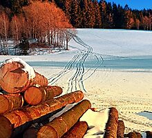 Timber in winter wonderland | landscape photography by Patrick Jobst