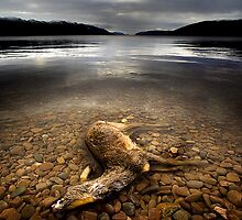 Surface Interruption-Loch Ness by colin campbell