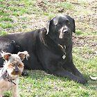 Buddy & Fenix - Best Friends by amiss