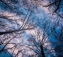Into the Sky by myself22889