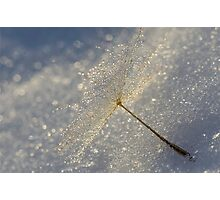 Winter Droplet's  Photographic Print