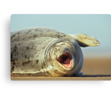 Laughing Seal Canvas Print