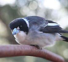 Butcher Bird by sassey