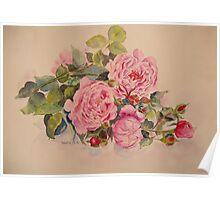 Mugs, Ipad, Iphone, tablet, pillow, roses more roses Poster
