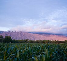 Southwest Corn by doorfrontphotos
