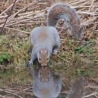 reflections of a tree rat by WhartonWizard